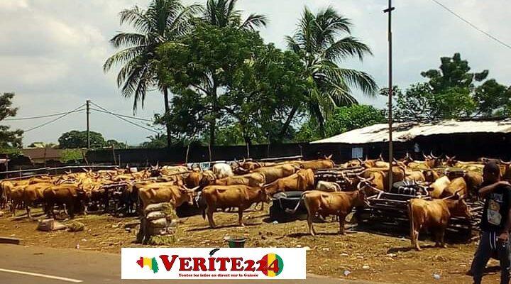 Lieu de vente de bœuf au Foutah