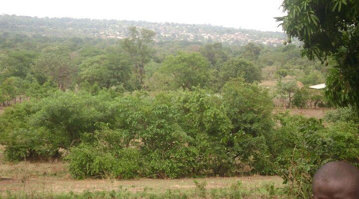 Une forêt de la ville de Dalaba