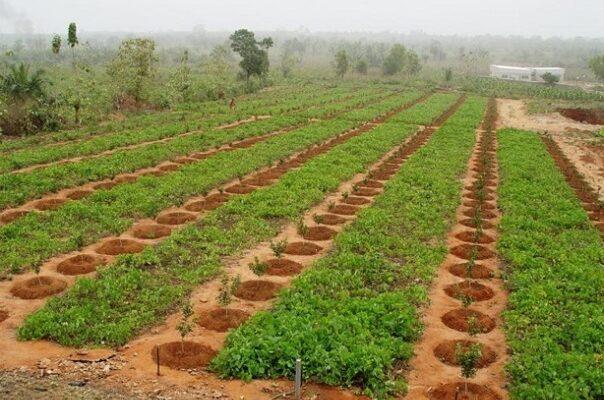 Un champ agricole (image d'illustration)